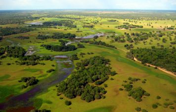 The Pantanal with Vazante Castelo (Nhecolandia)