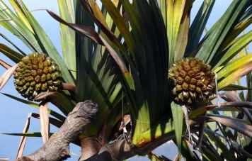 Flora of the coastal mountain rainforest