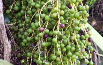 Southeastern flora