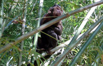 Monkeys in the Tijuca National Park