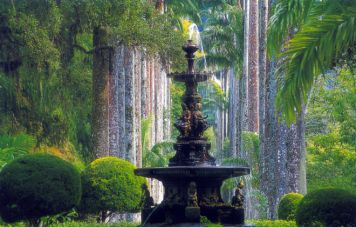 The botanical gardens of Rio