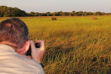 Photo Safari in the Southern Pantanal