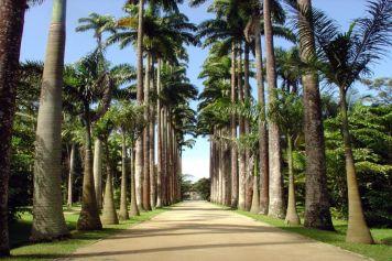 Jardim Botânico - the Botanical Gardens