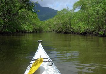 Paddling through mangrove forests