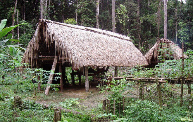 Amazon Rainforest Tour Featuring Manaus Anavilhanas Ja 250 National Park And Velho Air 227 O Scte