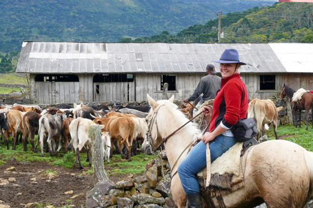 Horse Riding in Brazil - Cattle drive