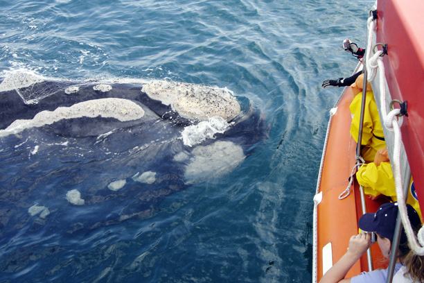 Whale Watching in Southern Brazil