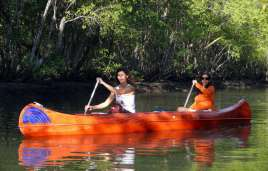 Kayaking throung mangrove forests