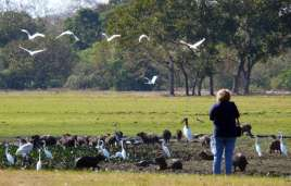 Easy to watch birds, capibaras and cayman
