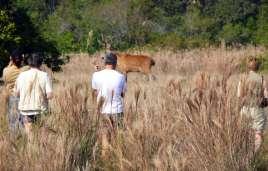 Group watching huge marsh deer