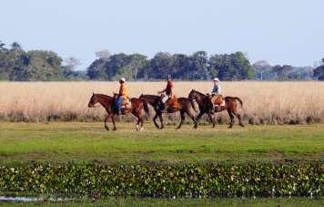 Riding through the Pantanal